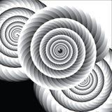 Svartvita Shell Spirals royaltyfri foto