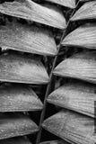 Svartvita texturer för slut upp gömma i handflatan in ormbunksbladet Costa Rica royaltyfri bild