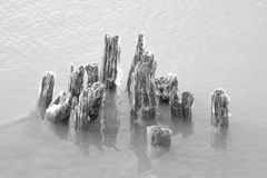 Svartvita träpyloner i Lake Erie Royaltyfri Foto