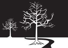 Svartvita trees Arkivfoto