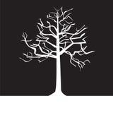 Svartvita trees - fjädra Royaltyfri Bild