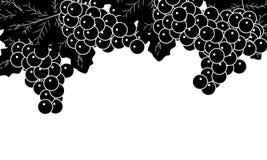 Svartvita vinrankor stock illustrationer