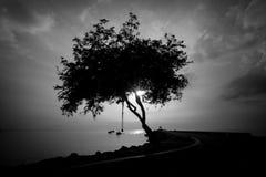 Svartvitt av den Silhourtte treen på soluppgång Arkivbild