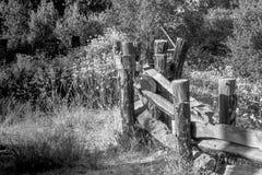 Svartvitt av gammalt trä och försett med en hulling - binda fäktningen i skogängmiljö royaltyfria foton