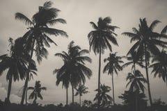 Svartvitt blekna färg av palmträdet på stranden Arkivbild