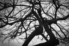 Svartvitt foto av det döda vinterträdet Arkivfoto
