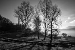 Svartvitt foto, höstlandskap, ett träd utan sidor, Royaltyfria Foton