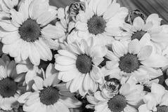 Svartvitt foto med knoppar av blommor som täckas med daggdroppenärbild arkivbild
