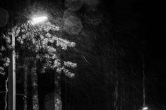 Svartvitt fotografi av en vinter nigh Det snöa för ` s Ljuset från lampan i parkera Arkivbild