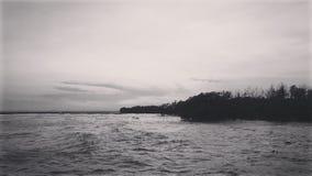 Svartvitt fotografi av seacoast- och mangroveskogen fotografering för bildbyråer