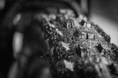 Svartvitt gummihjul Fotografering för Bildbyråer