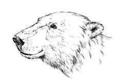 Svartvitt inrista den isolerade vektorbjörnen Fotografering för Bildbyråer