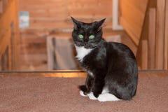 Svartvitt kattungesammanträde på den bästa plattformen av trätrappan Royaltyfria Bilder