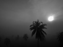 Svartvitt kokospalmer med dimma i gryningbakgrund Arkivfoto