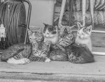 Svartvitt lämnades skjulet sjuka kattungar Arkivbilder