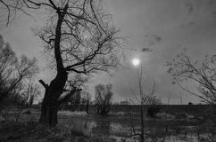 Svartvitt landskap som visar den gamla kusliga skogen och träsket Royaltyfri Bild