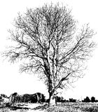 Svartvitt torrt träd Arkivfoton