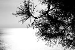 Svartvitt trä Arkivbild