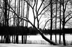 Svartvitt vinterlandskap royaltyfri bild
