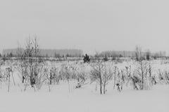 Svartvitt vinterlandskap med dolda träd för snö Royaltyfria Foton