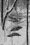 Svartvitt vinterlandskap med dolda träd för snö Arkivbild