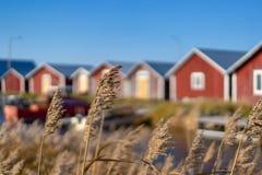 Svedjehamn, Finlandia - 14 de octubre de 2018: Casas pesqueras rojas en el tiempo soleado en Swedjehamn con la planta en el prime foto de archivo libre de regalías