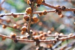 Svegliare le foglie sui rami di albero Fotografia Stock Libera da Diritti