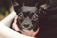 Sveglio dolce femminile curioso del cane Fotografia Stock