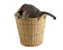 Sveglio gatto nel cestino di ratten Fotografia Stock