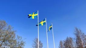 Svensk flagga som vinkar under den blåa himlen i flaggstång under berömmen för nationell dag arkivfilmer