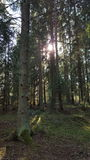 Svensk skog Arkivbild
