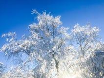 Svensk skog i vintertid Royaltyfri Foto