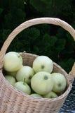 Svenska genomskinliga Blanche äpplen i korg Arkivfoto