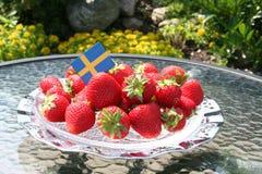 Svenska jordgubbar för solstånd Royaltyfri Foto