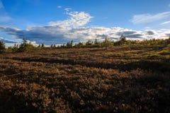 Svenskt berglandskap arkivfoton