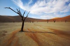 Svepande sand Arkivbilder