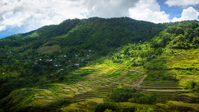 Svepande sikt av Maligcong risterrasser av Filippinerna royaltyfri foto
