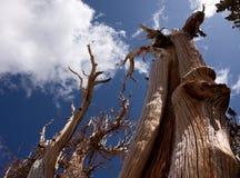 svepande trees royaltyfri fotografi