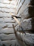 Svetets uma tocha na parede do porão Foto de Stock