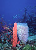 SVG deep water reef. Deep water reef in St. Vincent, West Indies, Caribbean showcasing a bright red finger sponge and vase sponge stock image