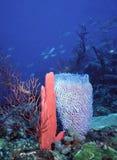 SVG deep water reef. Deep water reef in St. Vincent, West Indies, Caribbean showcasing a bright red finger sponge and vase sponge Stock Image