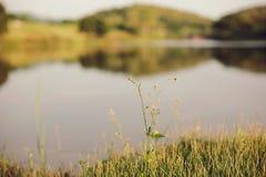 Sviluppo Fotografie Stock Libere da Diritti