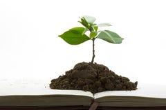 Sviluppo della pianta verde dal libro Immagini Stock Libere da Diritti