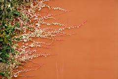 Sviluppo di pianta Fotografie Stock Libere da Diritti