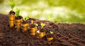 Sviluppo di soldi cento fatture del dollaro che crescono nell'erba verde Fotografia Stock