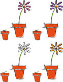 Sviluppo di un fiore Immagini Stock Libere da Diritti
