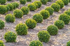 Sviluppo industriale degli alberi scolpiti della casella Immagine Stock Libera da Diritti