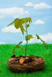 Sviluppo nel vostro risparmio Immagini Stock