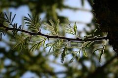 Sviluppo verde Fotografie Stock