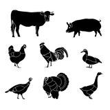 Svin för lantgårddjur vektor illustrationer